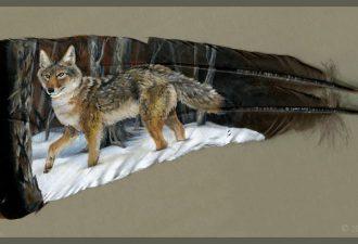 Рисунки на перьях от Бренды Лионс