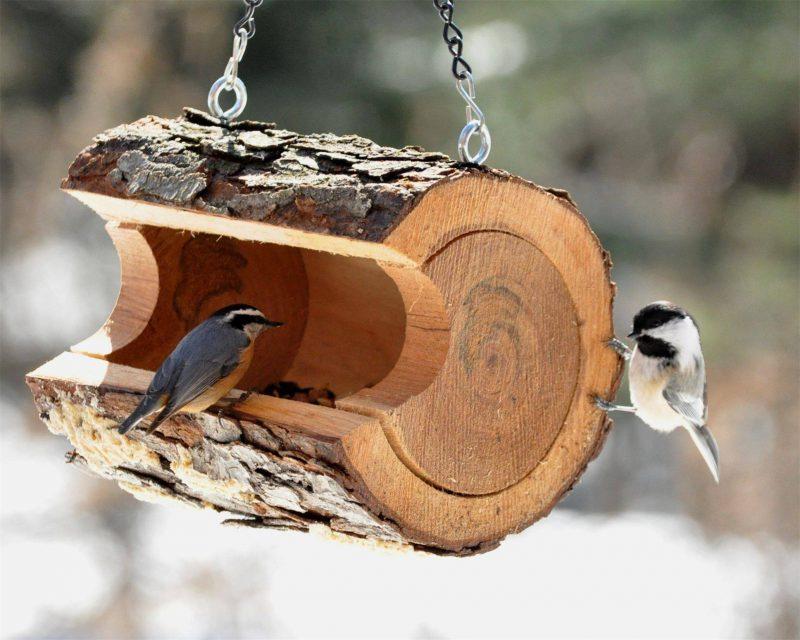 Оригинальные кормушки для птиц своими руками фото оригинальные идеи