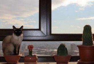 Коты флористы: украсят ваш дом и вашу жизнь