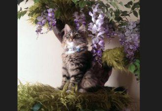 Потрясающий игровой домик для кошки в виде дерева