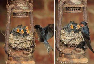 Птичьи гнезда, расположенные в самых удивительных местах