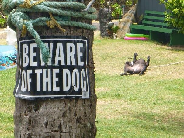 """""""Осторожно, злая собака"""": уморительные фото любимцев"""