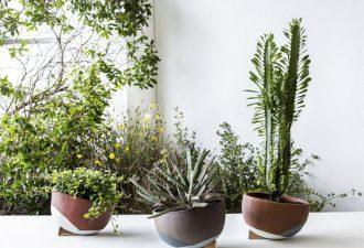 Растительный декор в жилище: освежаем мир вокруг себя