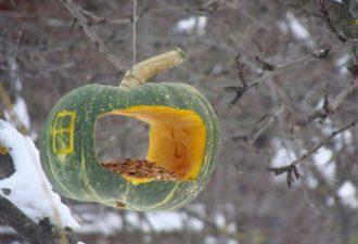 Самые интересные кормушки для птиц: подкармливаем братьев наших меньших