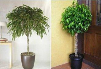 Список самых полезных комнатных растений, которые должен держать каждый