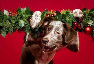 Собаки с праздничным настроением: братья наши меньшие зажигают