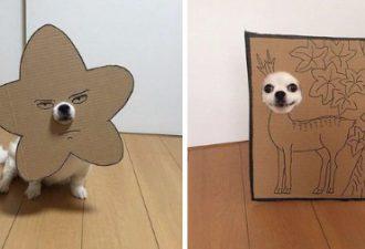 Японка вырезает для своей собаки забавные костюмы из картона